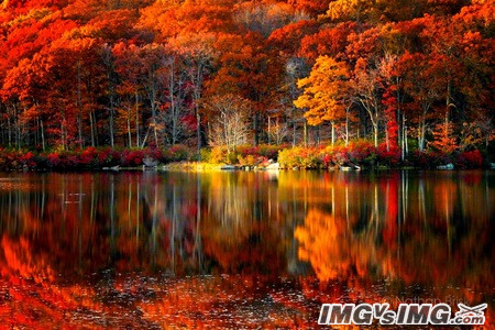 autumn lake water red leaves reflection