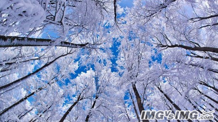 leaves trees sky forest snow