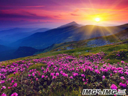 mountain flower sun sky