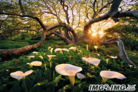 tree sun forest flower